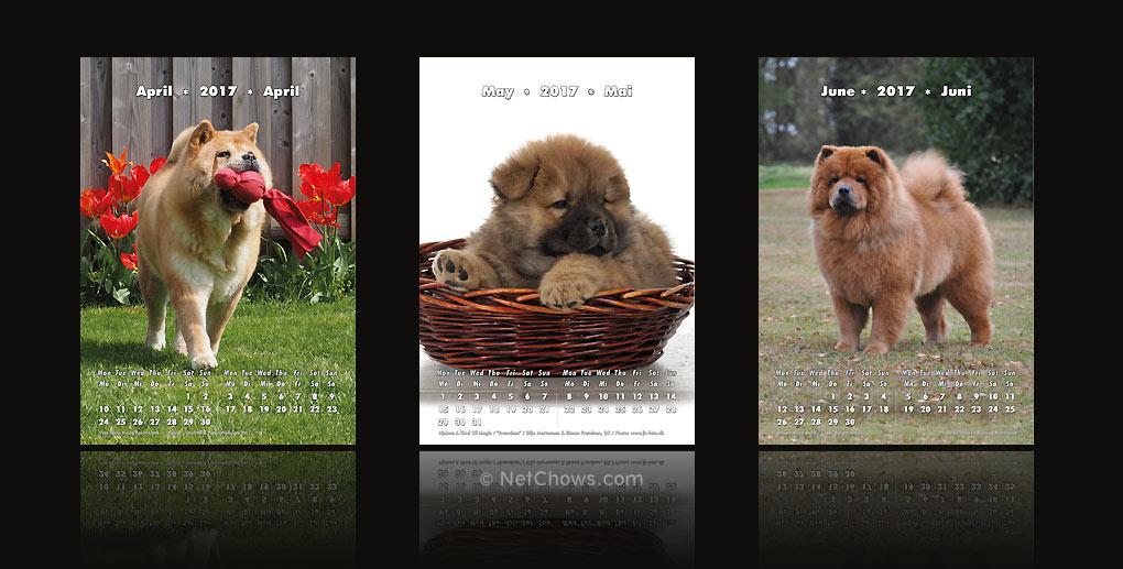 Chow-Chow Kalender 2017 / April bis Juni